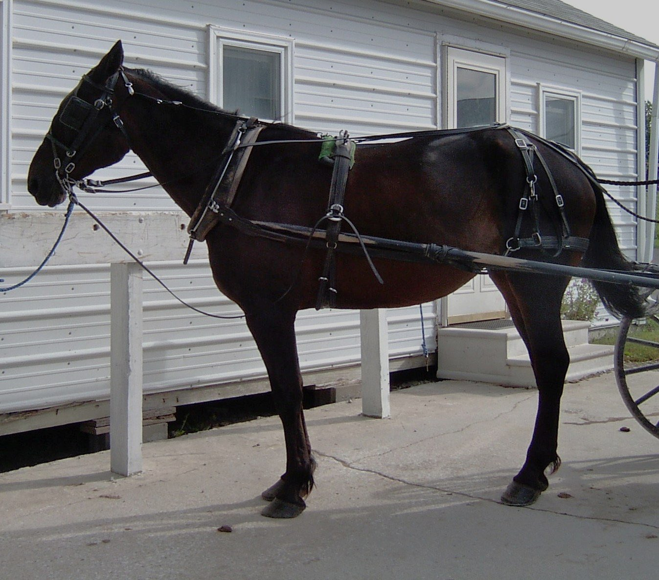 Carriage Auctions and Sales | Current Carriage Auctions in ... |Horse Buggy Harness