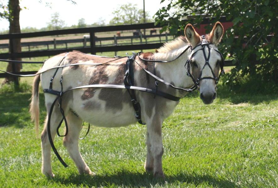 Marafun Harness, Mini Donkey/Mule-Small Donkey