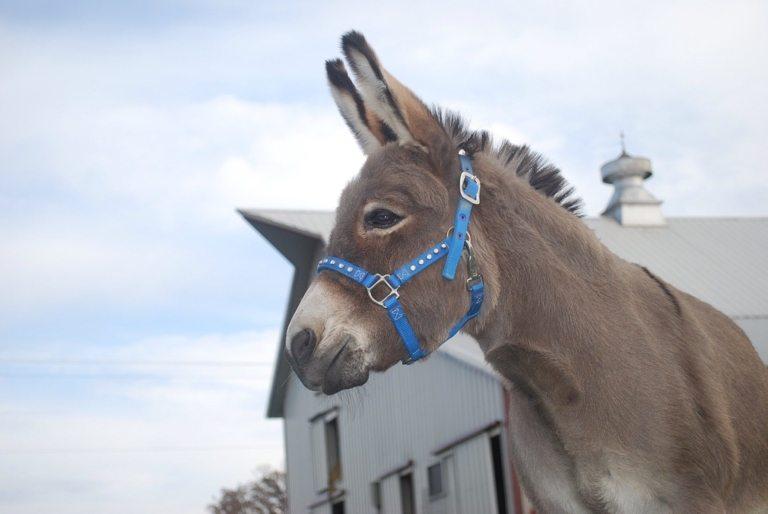 Nylon Sparkle Halter - Mini Horse/Donkey/Mule or Small Pony Sizes
