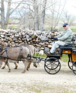 Donkey parade Champlin
