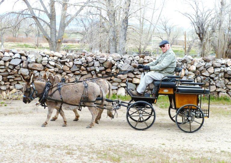 Parade Harness, Mini-Small Donkey/Mule - Chima Tack