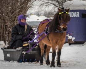 bridget-simon-sled-jan-2016-canada