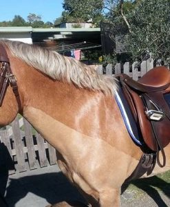 English Riding Tack