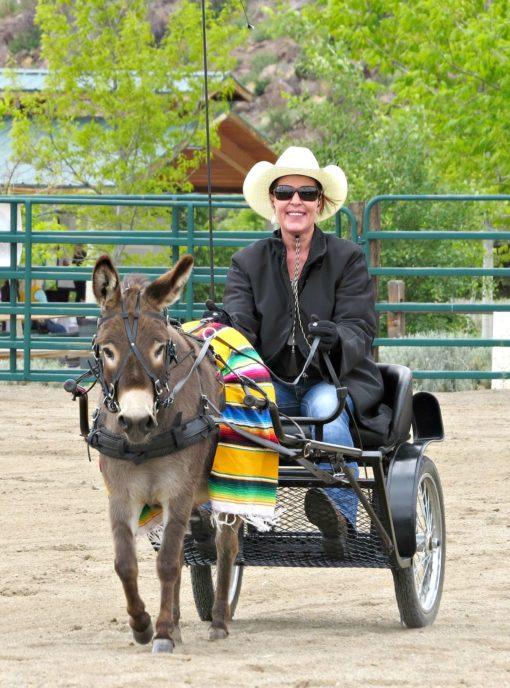 Donkey Harness