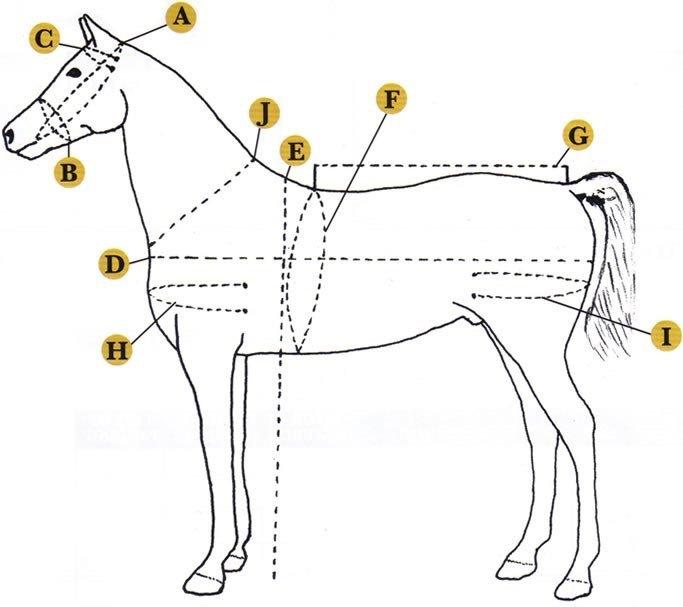 harness dorsal style  mini-draft