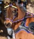 radar-marafun-purple-harness