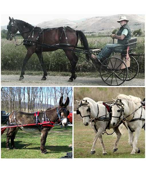 Pleasure/Buggy Harness, Mini Horse -Draft Sizes - Chima Tack