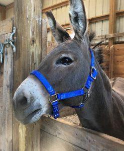 Donkey - Mule Halters