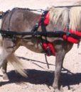 micro-mini-harness-side-red