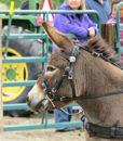 mini-donkey-harness-bridle