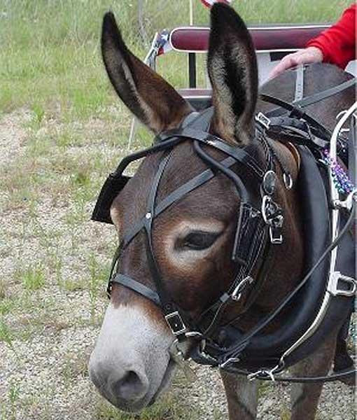 Farm/Work Harness, Mini Donkey/Mule-Small Donkey - Chima Tack