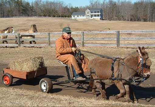 Pleasure Harness, Mini-Small Donkey/Mule - Chima Tack