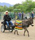 mule-harness-pony