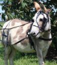 pleasure-harness-donkey