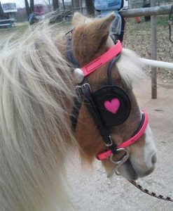 sweetheart-bridle-pink