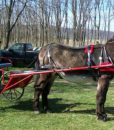traditional-mule-harness-red