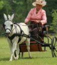 comfy-fit-harness-donkey-hilda