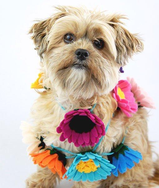 puppy wearing felt flower garland