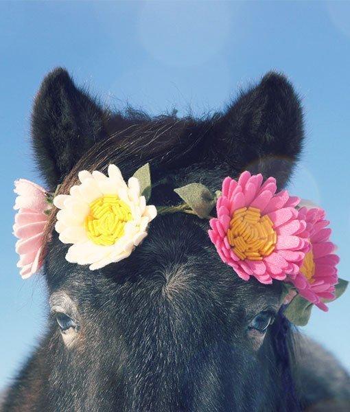 felt flowers on pony