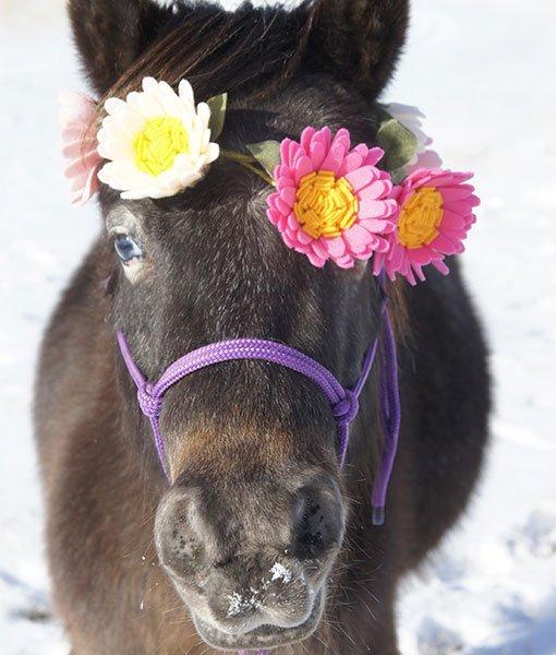pony wearing felt flowers with purple halter