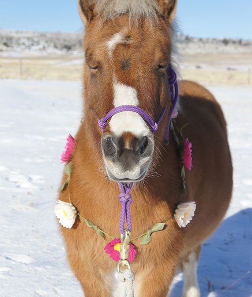 Horse wearing flower garland