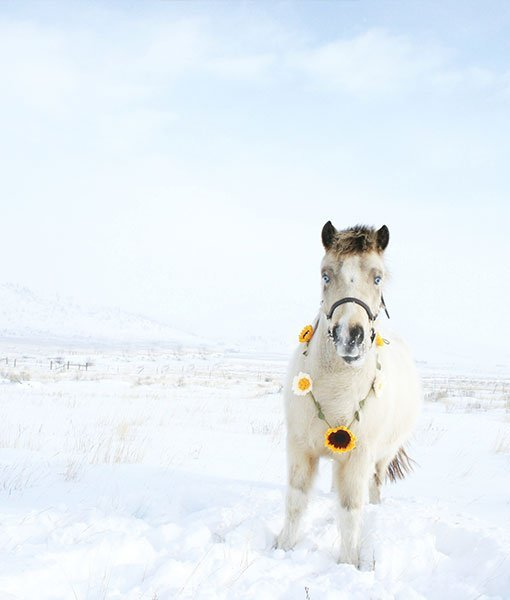 white horse wearing flower garland in the snow