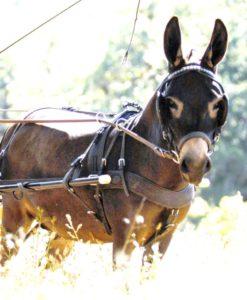 Donkey Tack