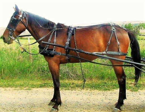 RED Permasoft best horse drawn harness pad set US made ALL SIZES mini to draft