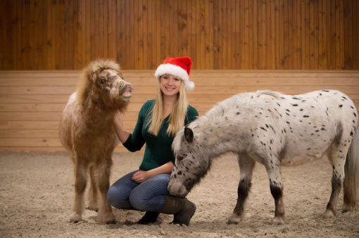 Miniature-Horse-Holiday