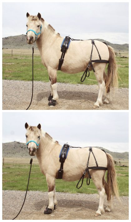 New Comfy Curve Harness Girth | Chimacum Tack